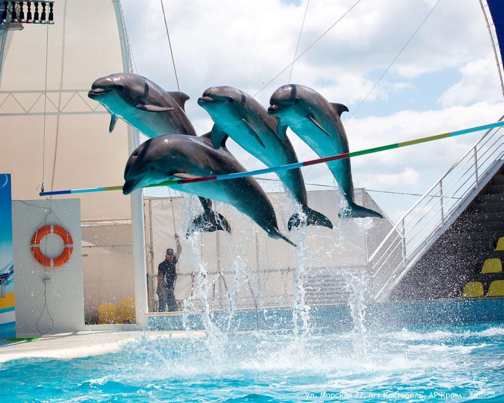 область, вакансии тренера дельфинарий крым учреждение-Отделение Пенсионного