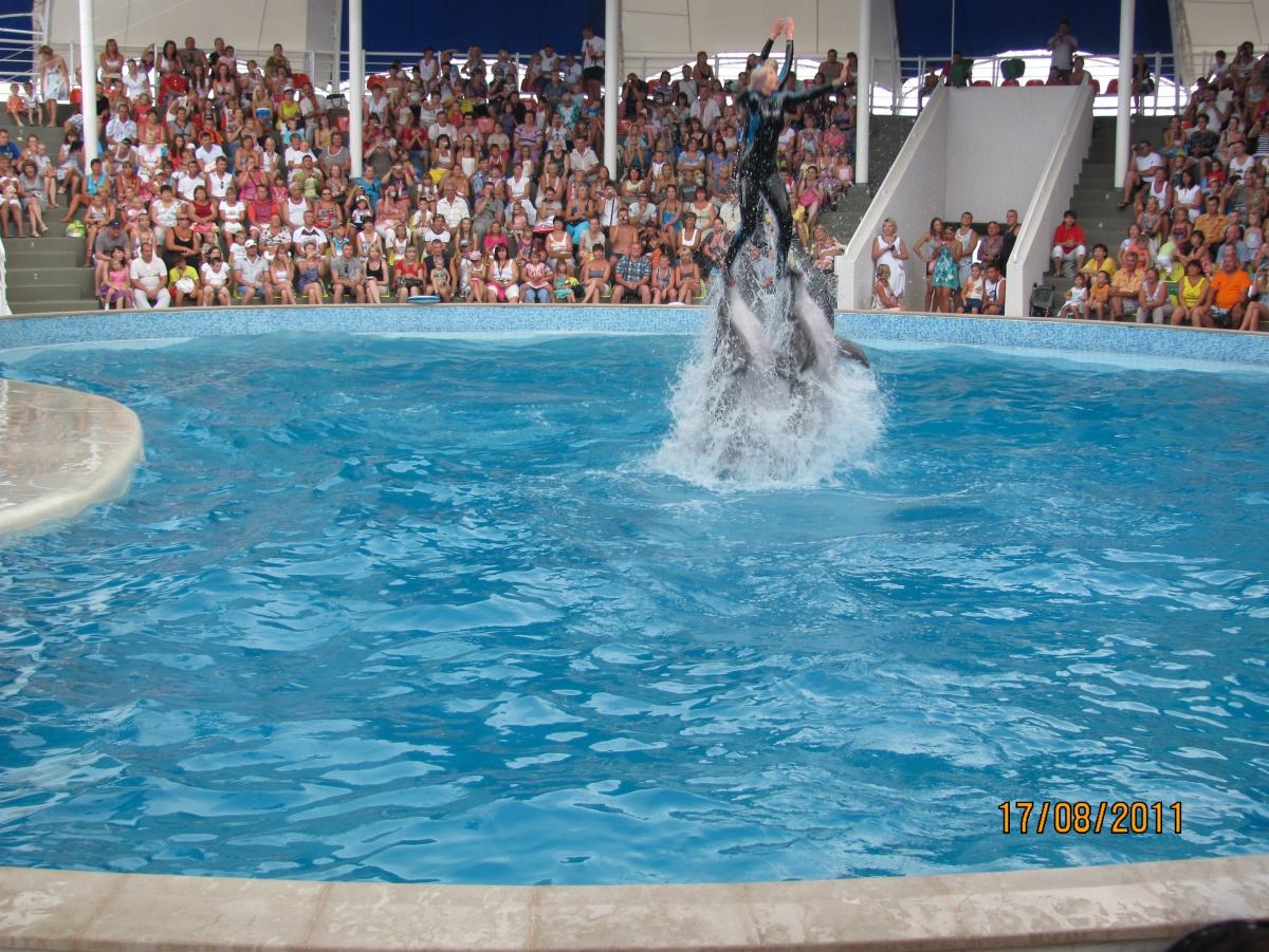 Натуристы с дельфинами видео